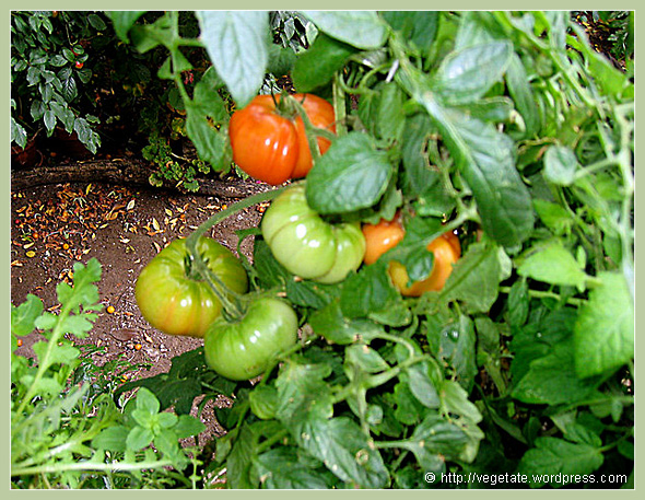Growin' Some Grub - from Vegetate, Vegan Cooking & Food Blog