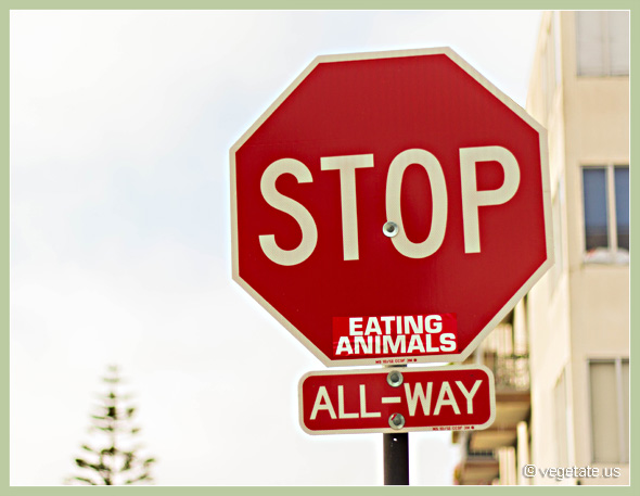 Stop Eating Animals ~ From Vegetate, Vegan Cooking & Food Blog