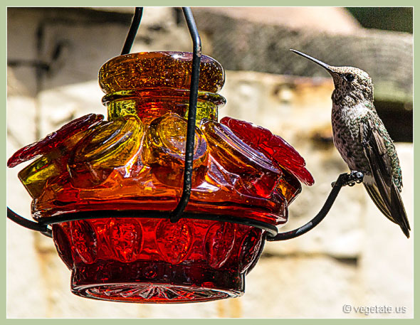Hummingbird Nectar Recipe ~ From Vegetate, Vegan Cooking & Food Blog